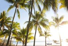 热带停住的海湾小船的棕榈树 免版税库存图片