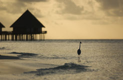 热带全景的日落 免版税图库摄影