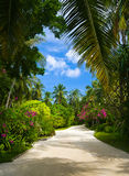 热带公园的路 免版税库存照片