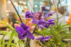 热带兰花是其中一朵地球上的最美丽的花 库存照片