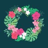 热带兰花木槿花花圈 图库摄影