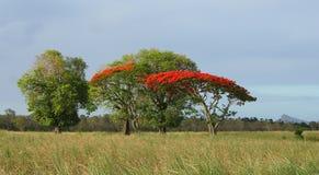 热带原野 图库摄影