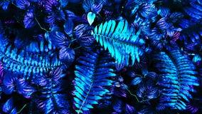 热带发光的叶子 免版税图库摄影