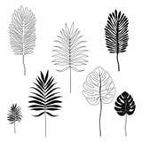 热带叶子剪影  免版税图库摄影