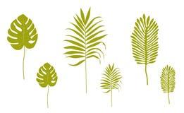 热带叶子剪影  免版税库存图片