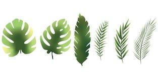 热带叶子动画片颜色绿色集合纹理 向量例证