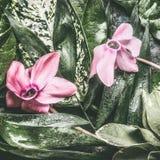 热带叶子和桃红色花与水下落 库存图片