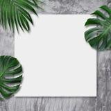 热带叶子和空白的帆布在水泥背景 免版税库存照片