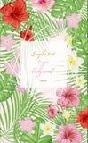 热带叶子和花 异乎寻常的背景 图库摄影