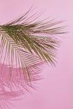 热带叶子的掌上型计算机 图库摄影