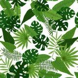 热带叶子的无缝的样式在绿色的 免版税库存照片
