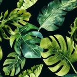 热带叶子的无缝的水彩样式,密集的密林 Ha 免版税库存照片