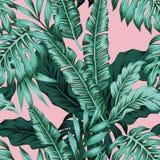 热带叶子绿色无缝的桃红色背景 库存图片
