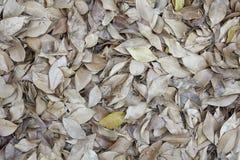 热带叶子背景纹理 图库摄影