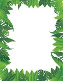 热带叶子背景 库存图片