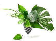 热带叶子花束  免版税图库摄影