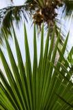 热带叶子视图 免版税库存照片