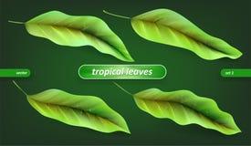热带叶子,在绿色背景隔绝的叶子集合 传染媒介例证,花卉元素 皇族释放例证