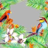 热带叶子,异乎寻常的鸟,兰花开花 密林卡片 水彩 免版税库存图片