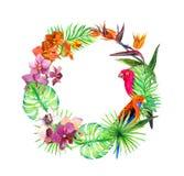 热带叶子,异乎寻常的鸟,兰花开花 花圈边界 水彩 库存照片
