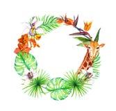 热带叶子,异乎寻常的长颈鹿动物,兰花开花 花圈框架 水彩 库存图片