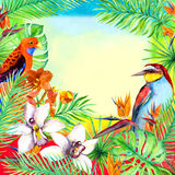 热带叶子,异乎寻常的鸟,兰花开花 卡片的水彩框架 库存照片