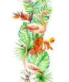 热带叶子,火鸟鸟,兰花开花 无缝的边界 水彩框架 库存图片