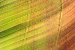 热带叶子 免版税库存图片