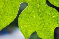 热带叶子 库存照片