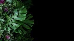热带叶子Monstera爱树木的人和园林植物弗洛尔 免版税库存照片