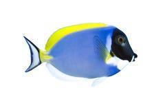 热带叶形装饰板的鱼 免版税库存图片