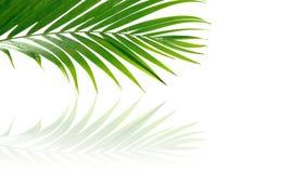 热带叶状体的掌上型计算机 免版税库存照片