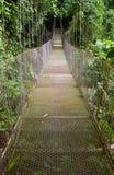 热带吊桥 免版税库存图片