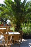 热带咖啡馆外部的棕榈树 免版税库存图片