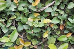 热带园林植物密集的绿色丛林  库存照片