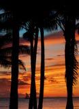 热带场面的日落 图库摄影