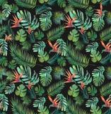 热带墙纸无缝的纺织品印刷品密林天堂鸟 皇族释放例证
