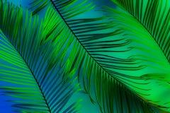 热带夏天背景-五颜六色的异乎寻常的叶子 免版税库存图片