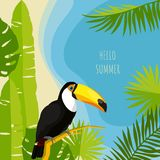 热带夏天设计模板 Toucan传染媒介例证 免版税库存照片