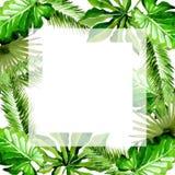 热带夏威夷在水彩样式把棕榈树框架留在 库存图片