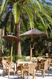 热带外部掌上型计算机餐馆的结构树 免版税图库摄影