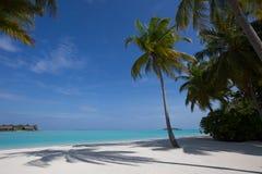 热带天堂假期-棕榈树、沙子和海洋 免版税图库摄影
