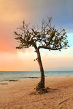 热带天堂平静的结构树 免版税库存照片