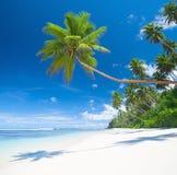 热带天堂棕榈树蓝色海沙概念 库存照片