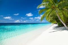 热带天堂海滩背景 库存图片