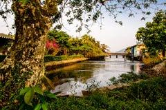 热带天堂自然河和树风景 免版税库存图片