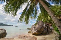 热带天堂-棕榈树特写镜头和美丽的沙滩 免版税库存图片