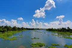 热带天空和河有浮动凤眼兰的 库存图片