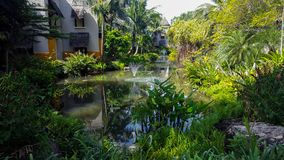 热带嫩绿的庭院池塘 免版税库存图片