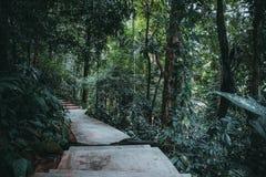 热带密林公园 免版税库存照片